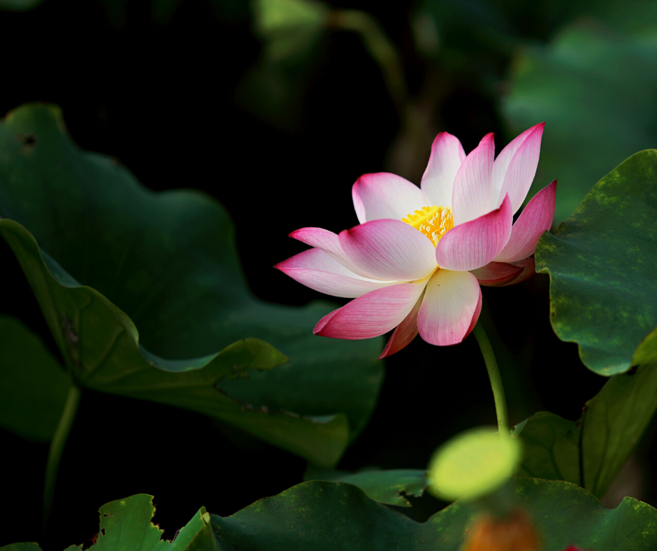 Root & Bloom – Guided Meditation
